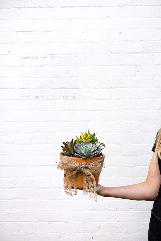 Succulent Garden - Mater Florist Brisbane